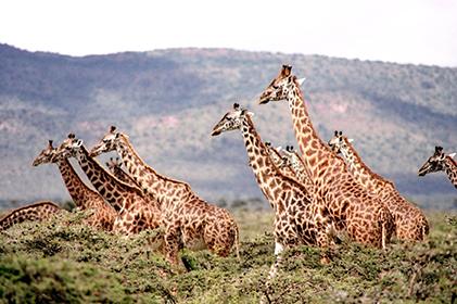 ทัวร์ THE ESSENCE OF SOUTH AFRICA แอฟริกาใต้ 5 DAYS 3 NIGHTS โดยสายการบินสิงคโปร์แอร์ (SQ)